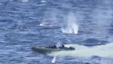 "Photo of خفر السواحل يطلق الرصاص على ""البارونات""و يحبط عملية تهريب المخدرات الى الضفة الاخرى"