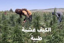 """Photo of لفتيت وزير الداخلية يسلط الضوء عن تحسن مداخل """"الكيف"""""""