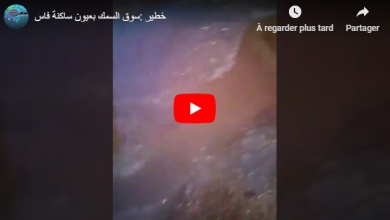 Photo of خطير :كارثة بيئية بسوق السمك لفاس