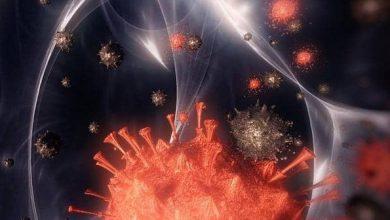 Photo of منظمة الصحة العالمية:فيروس كورونا لن يرحل و سيعيش مع البشر