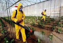 Photo of المجلس الاقتصادي و الاجتماعي و البيئي يوصي بالسلامة الصحية للأغذية و الحد من المبيدات