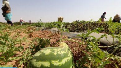 Photo of اونسا تكشف حقيقة تلوث الدلاح