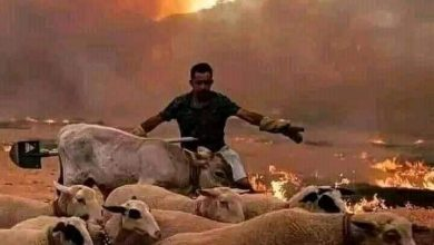 Photo of نظام الجنرلات بالجزائر مهووس بالمغرب و يوجه له اتهامات الضلوع في حرائق القبايل
